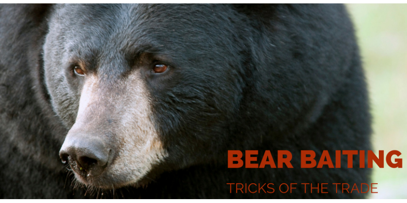 Bear Baiting Tricks of the Trade